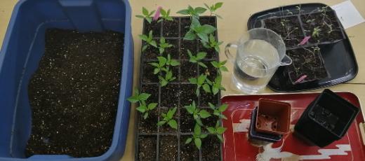 Faire ses propres semis intérieur (suite)